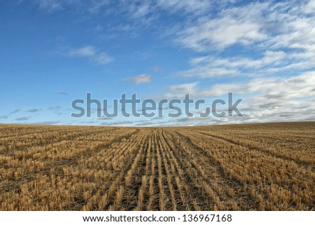 A harvested wheatfield
