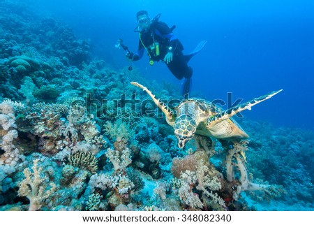 A hawksbill sea turtle gliding acrobatically in front of a underwater photographer - stock photo