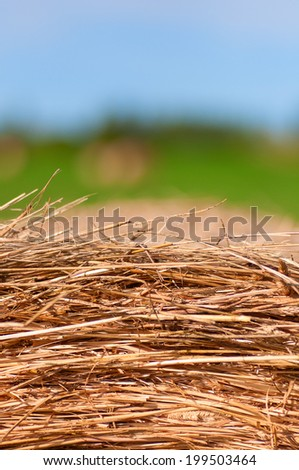 a Hay bale background. a summer background - stock photo