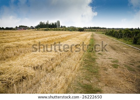 A hay field at a U Pick berry farm in the Pacific Northwest. - stock photo