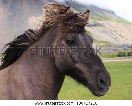 A head of a black horse - stock photo