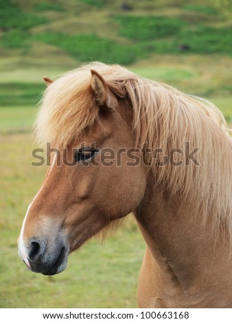 A head of a brown horse sideways - stock photo