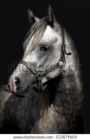 A head of a horse against a black background