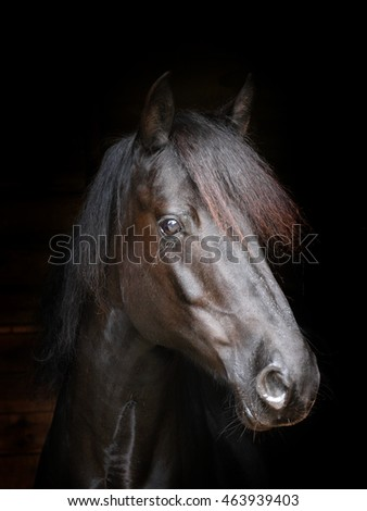 A head shot of a black pony against a black background.