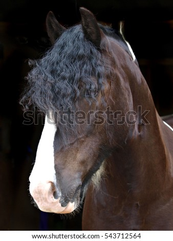 A head shot of a coloured horse against a black background.