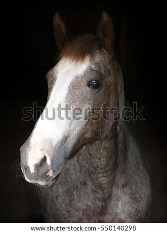 A head shot of a horse against a black background.