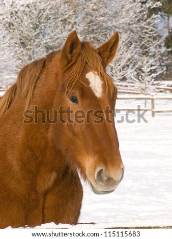 A head shot of a pretty horse in the snow.