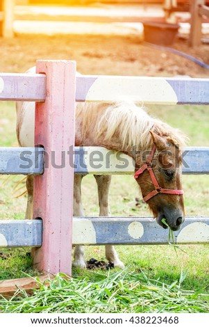 A head shot of little horse eating hay. - stock photo