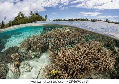 A healthy, beautiful coral reef grows in shallow water in the Solomon Islands. This Melanesian archipelago is one of the most biodiverse areas on Earth for marine organisms.  - stock photo
