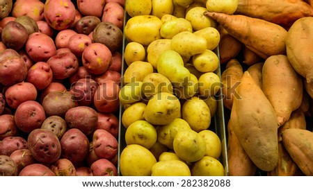 A heap of red and white potato tubers and yam in a supermarket at Colfax, Whitman County, Washington, USA. Full frame of potatoes, colorful and healthy concept. Panoramic style.