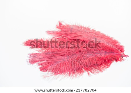 A heap of red ostrich feathers close up - stock photo