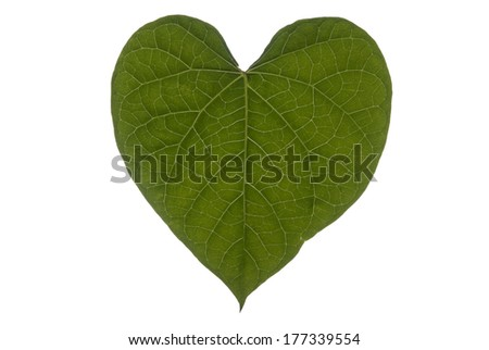 A heart shaped leaf on a white background.