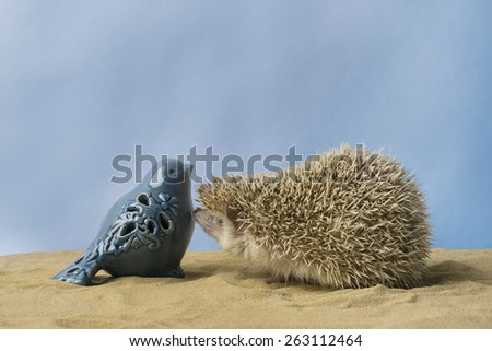 "A hedgehog says ""Hello"" to a little glass blue bird. They are sitting in sand with a blue background. - stock photo"