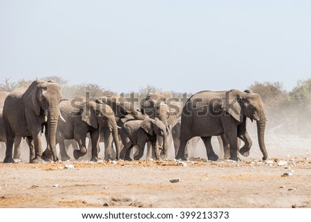 A herd of african elephants approaches Chudop waterhole in Etosha national park, Namibia.