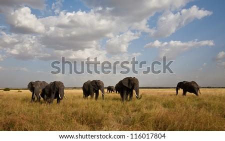 A herd of African Elephants moves across the savanna. Serengeti National Park, Tanzania. - stock photo