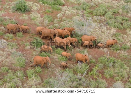 A herd of african elephants photographed form the air - stock photo