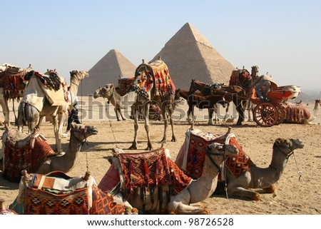 A herd of camels await riders near the great pyramids at Giza, outside of Cairo, Egypt - stock photo