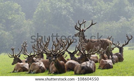 a herd of deer - stock photo