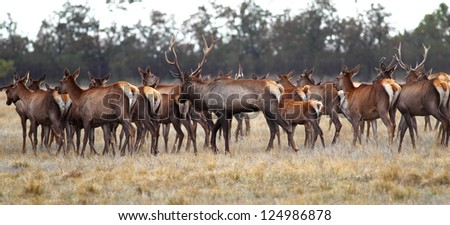 A herd of deer is on the steppe - stock photo