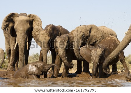 A herd of elephants at a watering hole