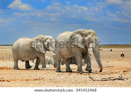 A herd of elephants next to a waterhole in Etosha National park with blue sky and rocky dry plains