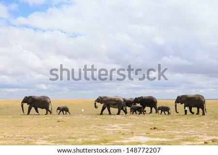 A herd of elephants with baby, Amboseli, Kenya