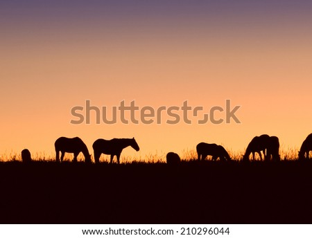 A herd of horses on a Colorado ranch at sundown. - stock photo