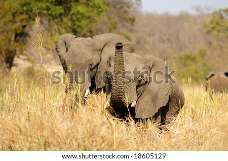 A herd of 50 in the riverbed - stock photo
