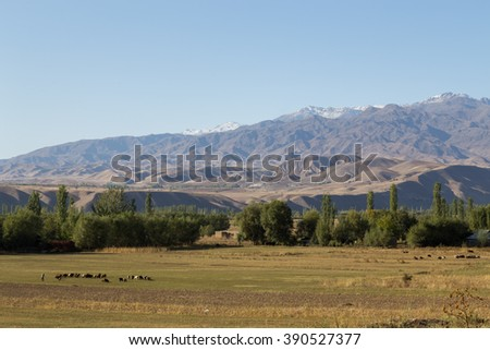 A herd of sheep and beautiful landscape close to Toktogul, Kyrgyzstan.