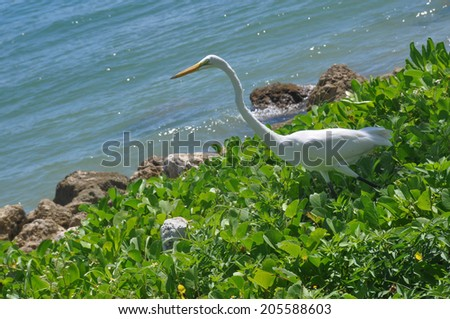 A Heron on the grass in Miami