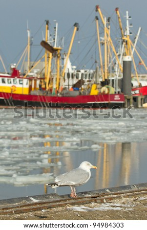 A herring gull with a fishing boat on the background - stock photo