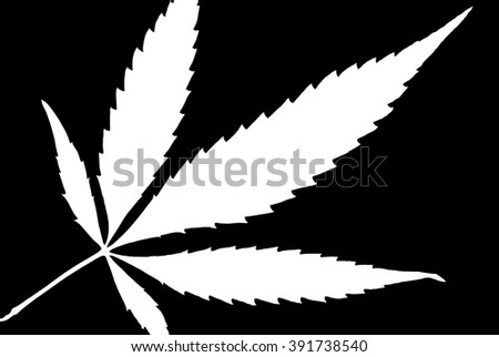A high contrast weed leaf designed in black and white. - stock photo