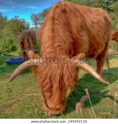 A high dynamic range image of a hairy highland cow situated in a grazing pasture on a farm.