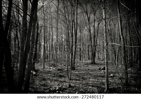 A highly dynamic black and white image of a spooky forest full of leafless, dead trees.