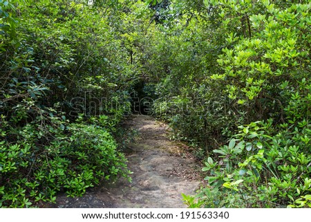 A hiking trail in Hong Kong