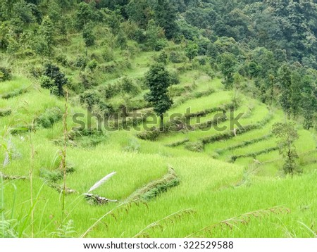 A hillside of rice paddies in Nepal.