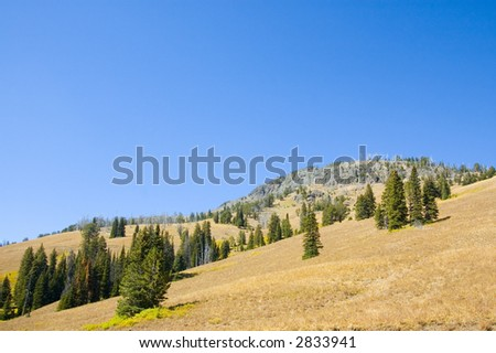 A hillside on a blue sky day in Lamar Valley of Yellowstone National Park