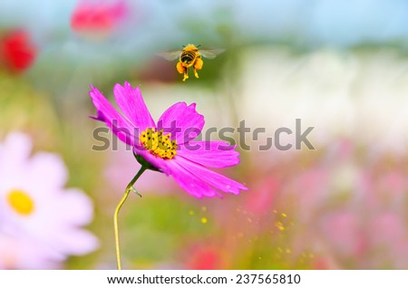 A honeybee taking off from a flower with some pollen spraying. - stock photo