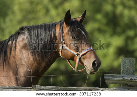 A horse at a fence during the summer
