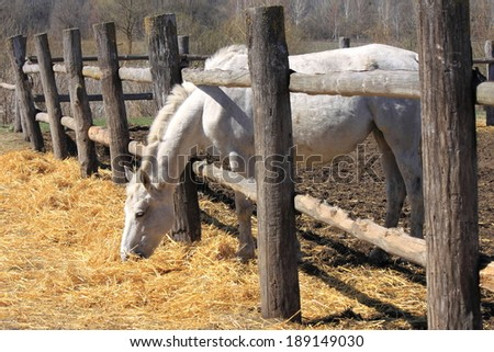 A horse behind a fence - stock photo