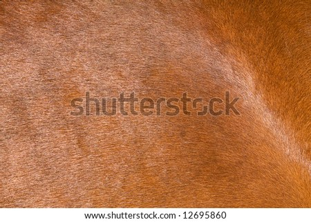 a horse fur close up - stock photo