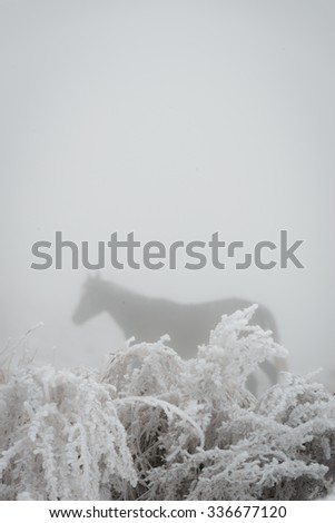 A horse grazes on frozen grass on a foggy day in the Tien Shan Mountains of the Kyrgyz Republic - stock photo