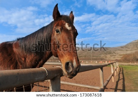 A horse in a fenced in area outdoors - stock photo