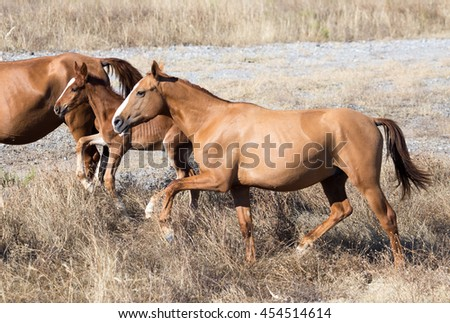 a horse in a pasture in the desert