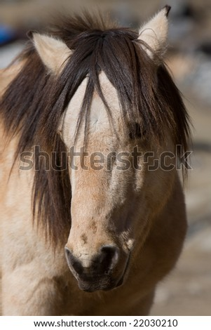 A horse in the mountain region between Nepal and Tibet