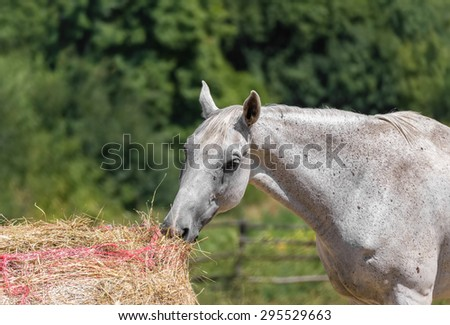 A horse is eating in a Tuscan farm