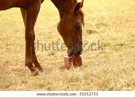 A horse licked a salt with pleasure. - stock photo