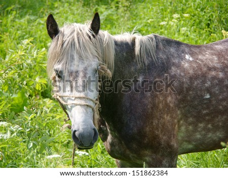 A horse on a background of green grass. Close-up.