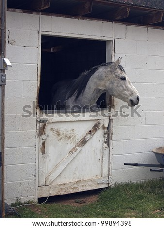 A horse peers from its stall in a rural ranching community. - stock photo