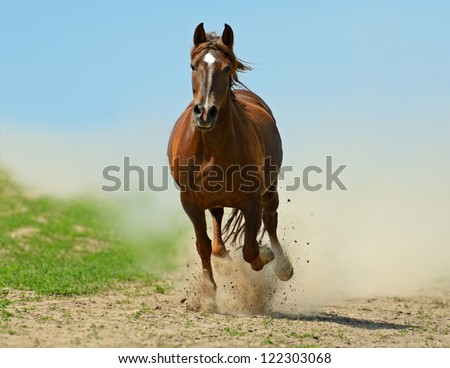A horse running gallop on the field - stock photo